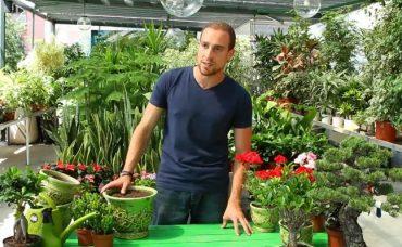 Bitkilerde Saksı Değişimi