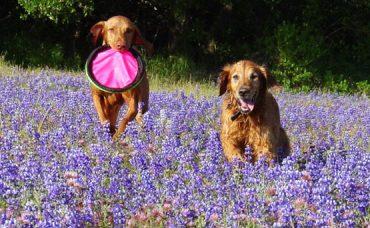 Köpek Eğitiminde Karşılaşılan Sorunlar