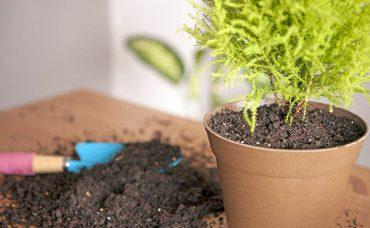 Bitkilerde Saksı Değişimi Nasıl Yapılır?