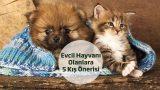 Evcil Hayvanı Olanlara 5 Kış Önerisi!