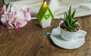 Eski Fincandan Dekoratif Çiçek Aranjmanı