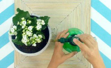 Çiçeklerde Yaprak Bitlerini Yok Etmenin Kolay Yolu