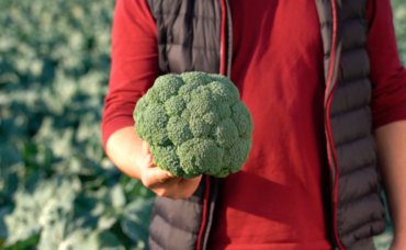 Şimdi Brokolinin Tam Mevsimi!