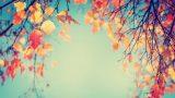 Yeni Mevsim Yenilik Bekler: Sonbaharda Yapacağınız 7 Değişim