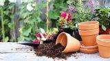 Bitkileri Sularken Bunlara Dikkat Edin