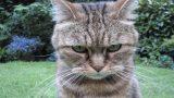 Kedilerde Tüy Dökülmelerine 6 Çözüm Önerisi