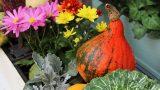 Solan Bitkinizi Canlandırmak İçin Bunları Deneyin