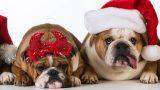 Yılbaşında Evcil Hayvanlar İçin 6 Güvenlik Önlemi