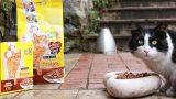 17 Şubat Dünya Kediler Günü'ne Özel: Kedileri Anlama Rehberi