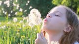 Polenlere Dikkat: Bahar Alerjisini Önlemek İçin İpuçları
