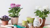 Sonsuza Dek Bizimleler: Evdeki Saksı Çiçeklerini Hayatta Tutacak Tavsiyeler