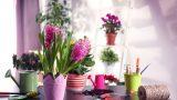 Ofis Masasına Koyabileceğiniz 6 Çiçek