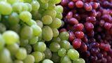 Üzüm Çekirdeklerinin İyi Geldiği 9 Sorun