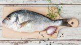 Lüfer Balığı Hakkında Bilmeniz Gerekenler