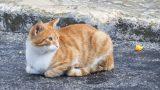 Kedileri Sıcaktan Korumanın 7 Yolu