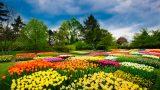 Bahçe Düzenlemesi Nasıl Yapılır? 7 Öneri