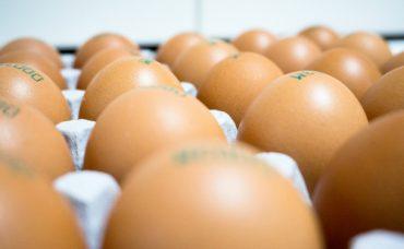 Yumurta Hakkında 8 Değerli Bilgi