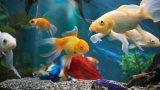 Balık Beslemek İsteyenler Buraya: Balık Bakımı Hakkında 6 Önemli Bilgi