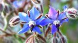 Karadeniz'in Çiçeği Hodan Otu Hakkında 7 Bilgi