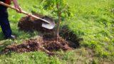 Dünyayı Yeşile Boyamak İsteyenlere: Ağaç Nasıl Dikilir?