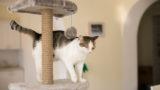 Kedilerin Mutfak Tezgâhına Çıkmasını Engelleyebilecek 6 Öneri